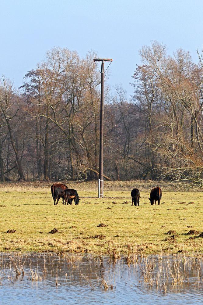 Einweihung und Übergabe folgt: Das Zukunftszeichen der Stadtwerke Fröndenberg im NSG Kiebitzwiese, Foto: Gregor Zosel