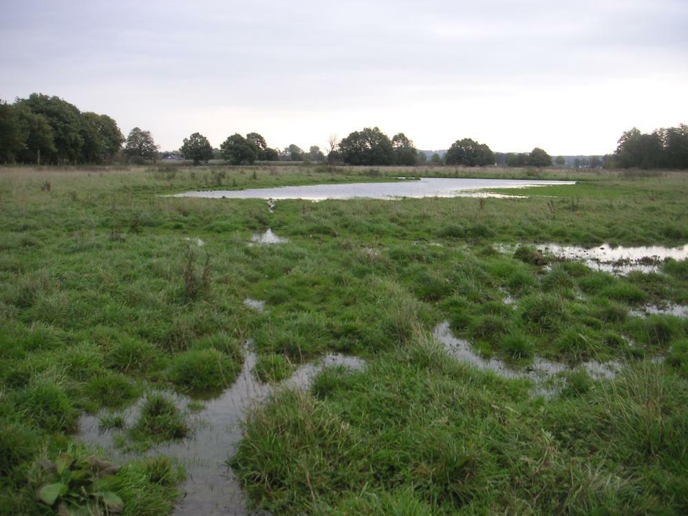 Vernässungflächen in der Kiebitzwiese