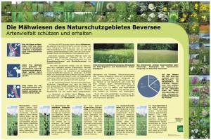 Vergrößerung durch Anklicken der Hinweistafel `Die Mähwiesen des Naturschutzgebietes Beversee - Artenvielfalt schützen und erhalten`