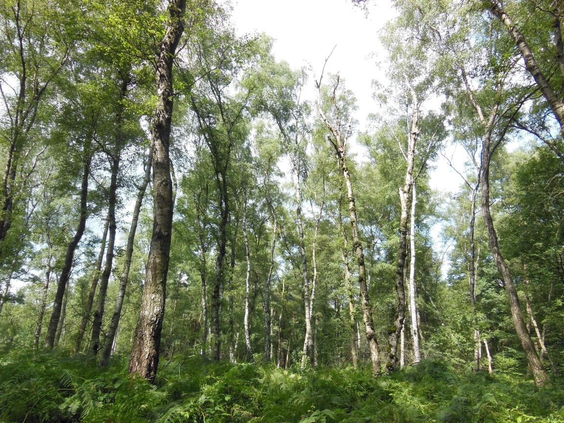 manche Arten sind gerade auf lichte, offene Waldbereiche angewiesen - hier ist die Walddynamik greifbar