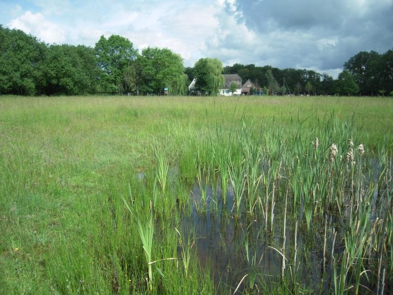 artenreiche Nasswiese mit Kleingewässer und dem Blick auf Haus Eickholt