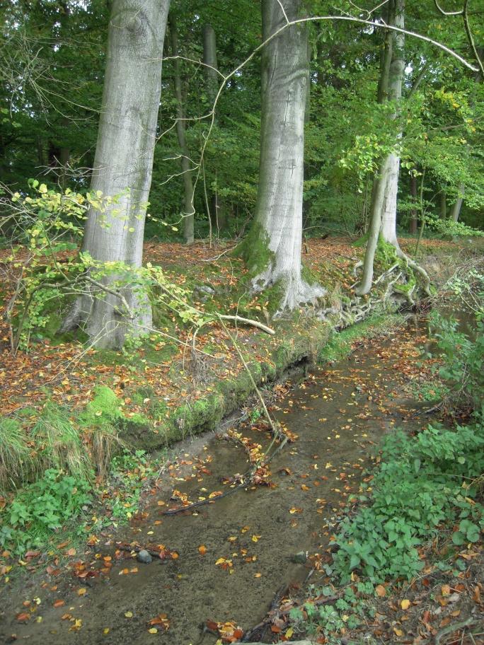freier Lauf für die Düsbecke im Norden des Gebietes