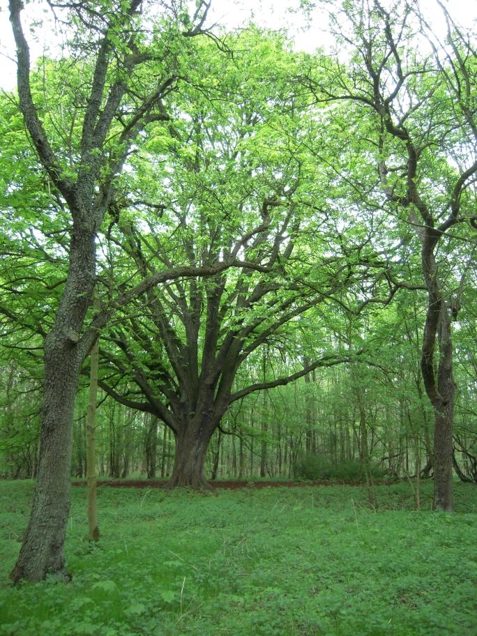 eine ausladende Kastanie (Aesculus hippocastanum) und ein paar alte Birnenbäume (Pyrus communis) lassen noch auf die vormalige Nutzung schließen