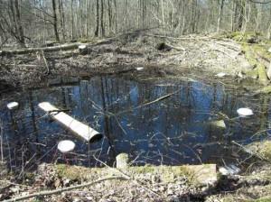 Mit Amphibienfallen ans Werk – dem Kammmolch auf der Spur.