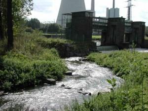 Die Umflut um das Wehr Buddenburg stellt für viele Organismen wieder eine natürliche Durchgängigkeit der Lippe her