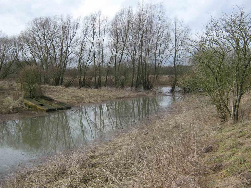 Nur noch bei Hochwasser ist die Kammer der ehemaligen Schleuse Horst geflutet. An die Stelle von offenen Wasserflächen sind hier sukzessive Röhrichte und Weidengebüsche getreten