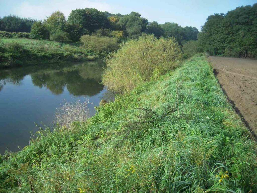 """In Teilen des NSG """"Lippeaue Selm"""" nehmen landwirtschaftlich intensiv genutzte Äcker noch größere Flächen ein und grenzen unmittelbar an schützenswerte Uferhochstaudenfluren"""