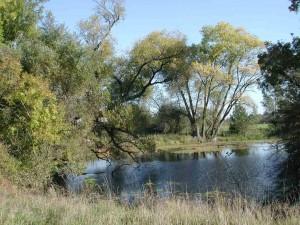 """Die Altwasser der Lippe im NSG """"Lippeaue von Werne bis Heil"""" besitzen oft alte Ufergehölze und Teichrosendecken"""