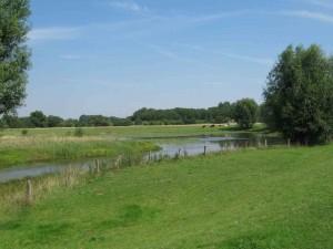 """Die Grünlandflächen um die Altwasser im ehemaligen NSG """"Unterlauf Beverbach"""" werden extensiv mit Hausrindern beweidet"""