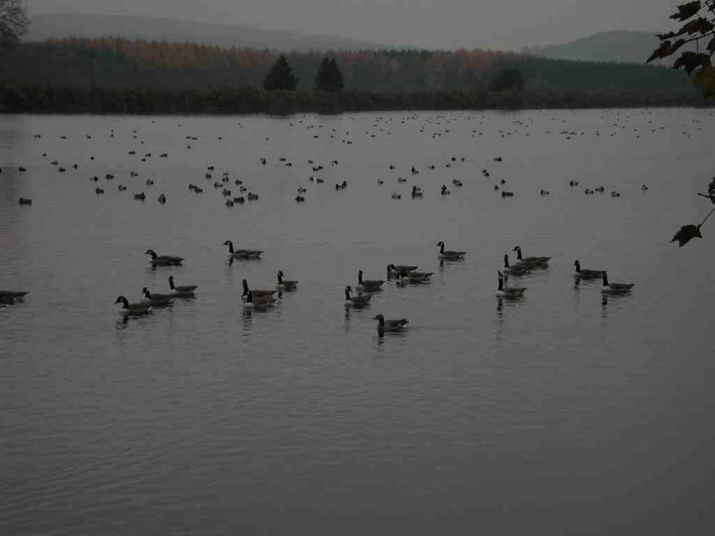 Stausee Hengsen – Geiseckesee, auf jeden Fall der kleinste Ruhrstausee, Eldorado für Wasservögel