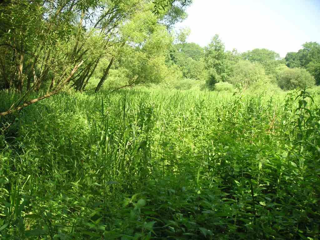 Feuchte Hochstaudenfluren im Gehrenbachtal – ohne Pflege droht die Verbuschung