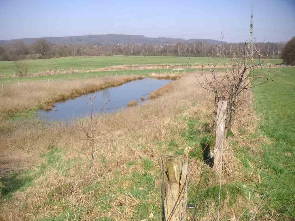Kleinflächiger Wechsel aus trockenen, feuchten und nassen Grünlandflächen an der Terrassenkante