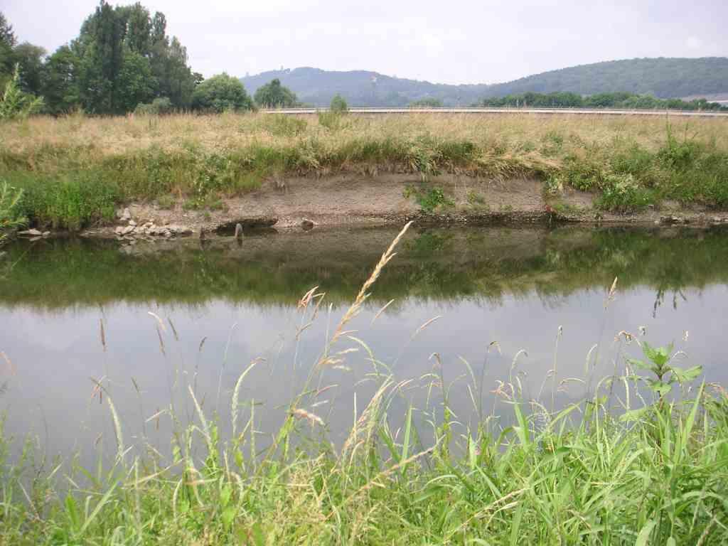 Natürliche Uferschwalbensteilwand an der Ruhr – erfolgreiche Neubesiedlung