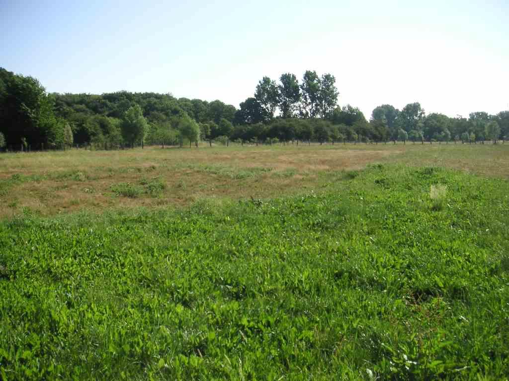 Auf bestem Wege: artenreicheres Grünland auf ehemaligen Ackerflächen