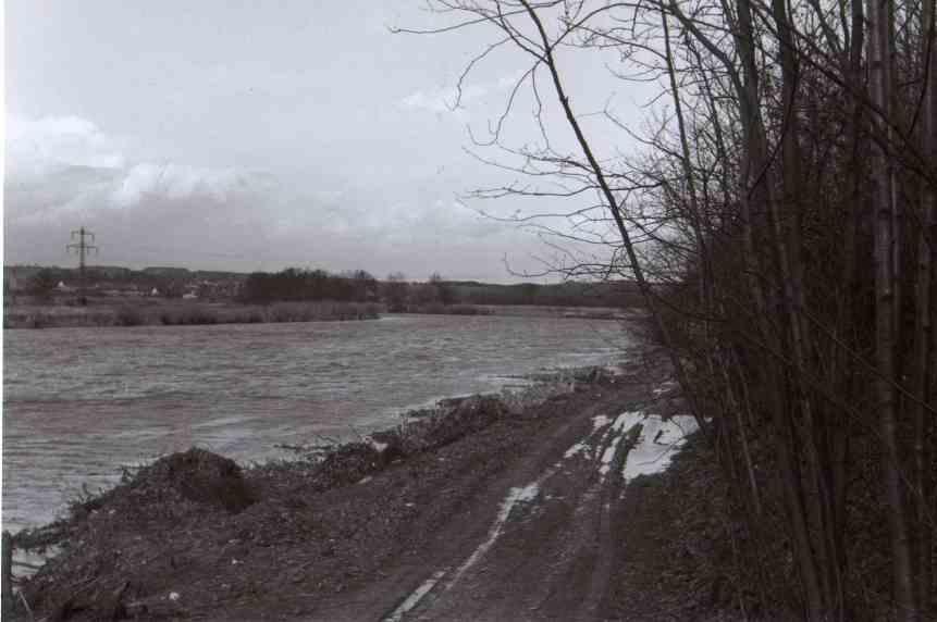Die noch weitgehend gehölzfreie Kiebitzwiese 1961 vom gegenüberliegenden Ruhrufer aus gesehen Foto: Arno Bock