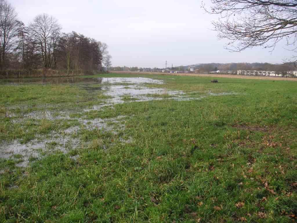 Wasser marsch – erstmals erhält die Kiebitzwiese wieder Wasser aus dem Rammbach