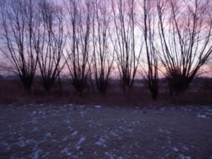 Bei Frost und Morgenröte ging es den Kopfbäumen an den Kragen