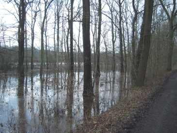 Der Beversee trat gen Norden so stark über die Ufer, dass die alten Stieleichenbestände bis zum Wanderweg mit den Füßen im Wasser standen.