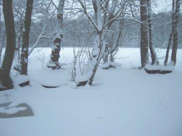 Anhand der Eisbildung im Januar lässt sich gut nachvollziehen, wie hoch der Wasserstand des Beversees zeitweilig war.