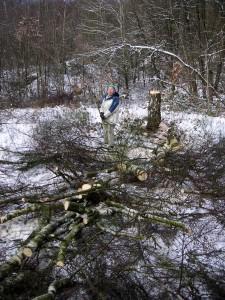 Nicht mehr lange allein auf weiter Flur: Renate Neuhaus macht kurzen Prozess mit einer Birke!