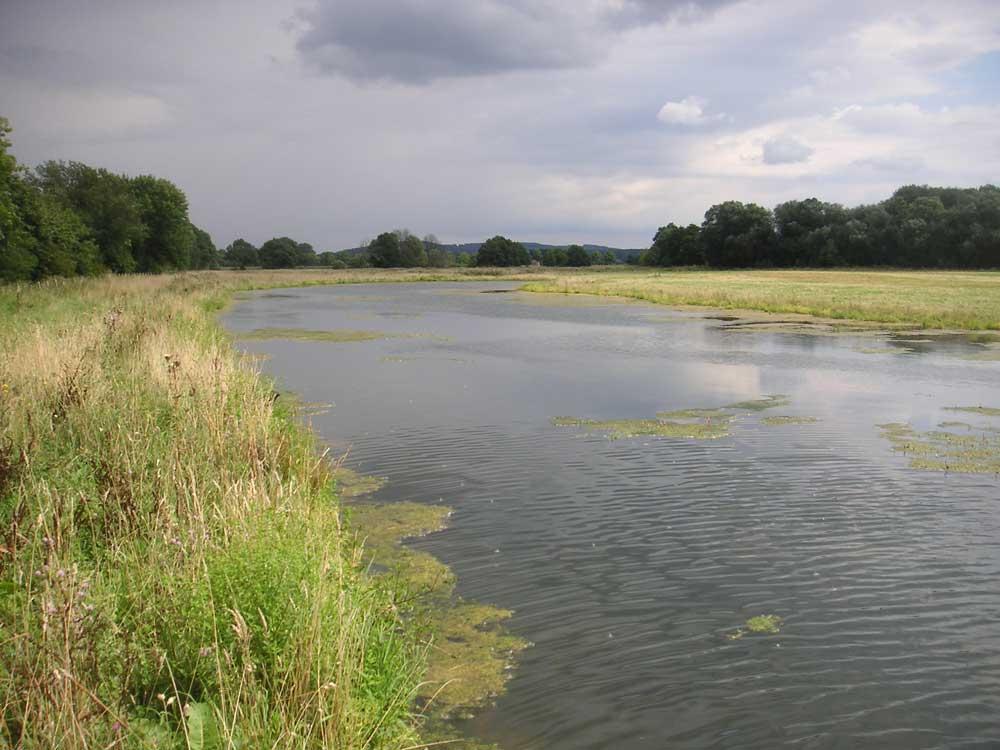 Großflächige Blänken im Naturschutzgebiet Kiebitzwiese