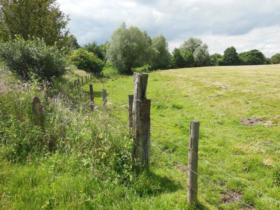 diese Fläche ist schon seit mindestens Mitte des letzten Jahrhunderts Grünland - so blieb das natürliche Auenrelief erhalten