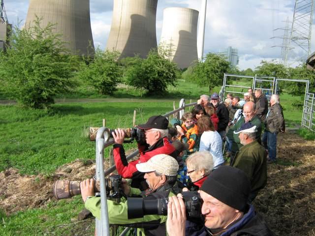 Heckrinder beobachten in der Lippeaue unter dem Gerstein-Kraftwerk