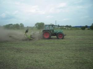 4. Schritt zur erfolgreichen Mahdgutübertragung – gleichmäßiges Verteilen des vorgereiften Samens auf der Fläche
