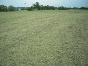 Das Resultat – das Schnittgut hält die Feuchtigkeit in Bodennähe und bietet optimale Keimunsgbedingungen