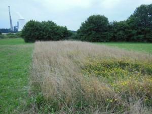 Auf den ersten Blick ein Streifen mit altem Gras. Aber Achtung, hier steckt Leben drin