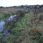 Verkrauteter und verlandeter Zulaufgraben