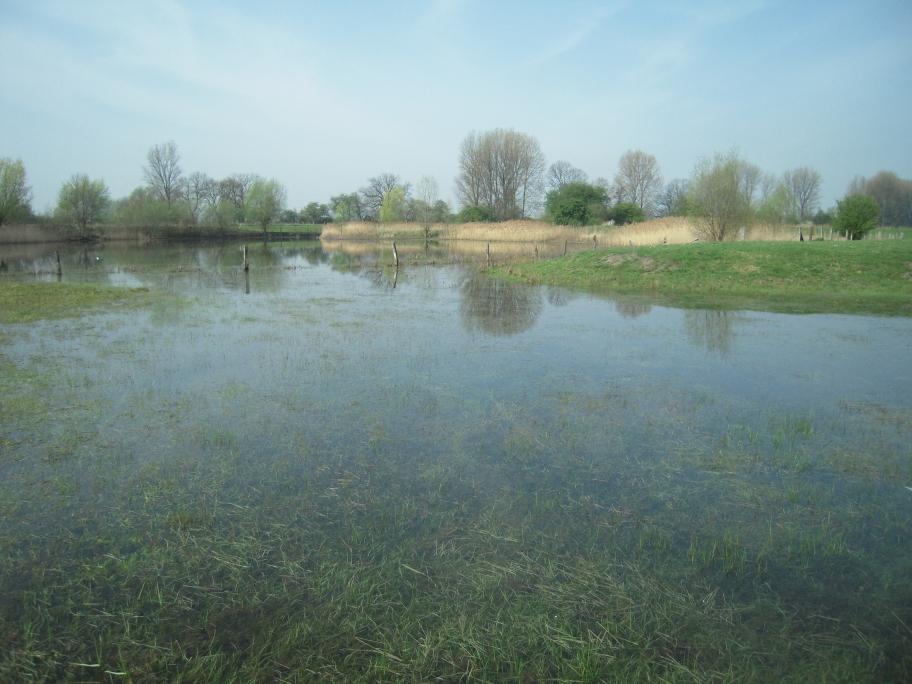 altes Weidegrünland unterhalb der Ökologiestation des Kreises Unna - temporär durch das hochanstehende angrenzende Gewässer überstaut